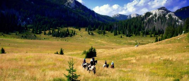 Linden Tree Retreat & Ranch Horseback riding